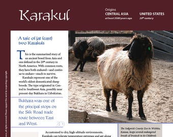 Deborah Robson's Guide to Fiber: Karakul (PDF download)