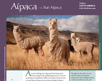 Deborah Robson's Guide to Fiber: Suri Alpaca (PDF download)