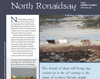 Deborah Robson's Guide to Fiber: North Ronaldsay (PDF download)