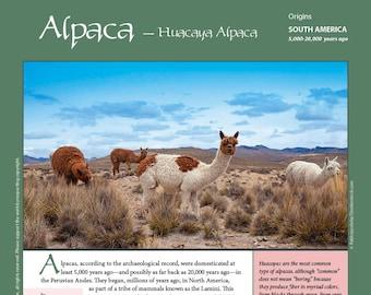 Deborah Robson's Guide to Fiber: Huacaya Alpaca (PDF download)