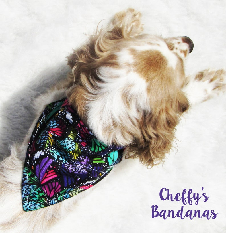 Colorful Abstract Butterfly Dog Collar Bandana