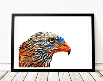 Red kite watercolor image, birdlovers wall art, bird photography, bird of prey poster