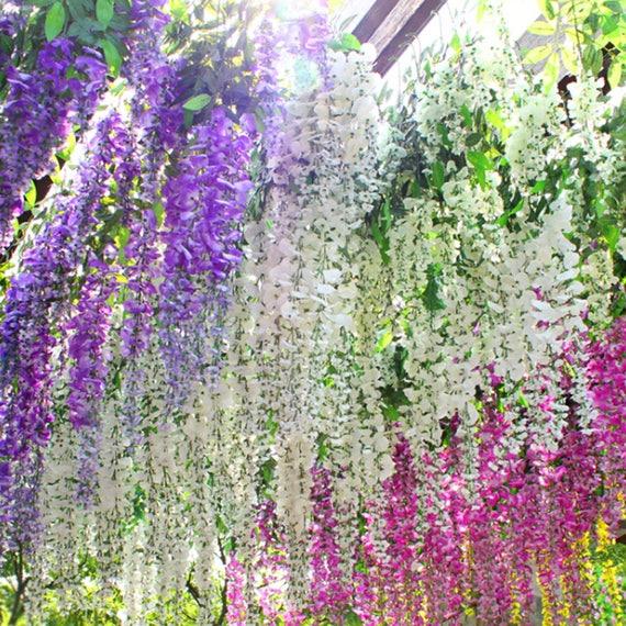 10pcs  Chinese Wisteria Seeds Purple Floribunda Wisteria Vine