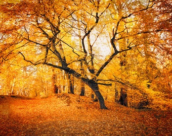 Digital File, Instant Download, Landscape photography, Photography, trees, Nature photography, Wall Art, Wall Deco, Autumn