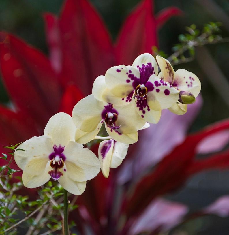Hawaiian Orchids Orchid Photo Flowergarden Wall Decor Etsy
