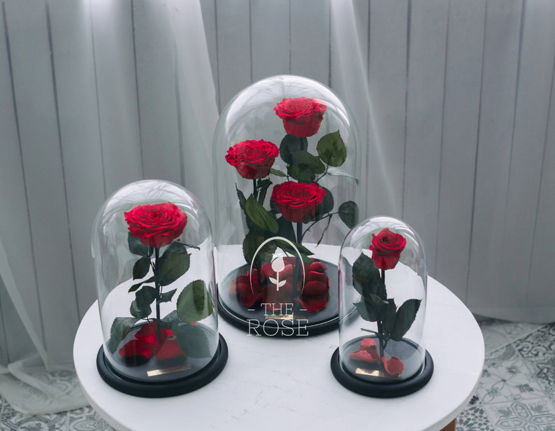 La Belle Et La Bete Rose Rouge Classiqueーcadeau La Fete Des Etsy
