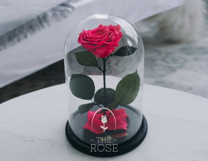 Die Schöne Und Das Biest Rose Pink Geschenk Am Muttertag Etsy
