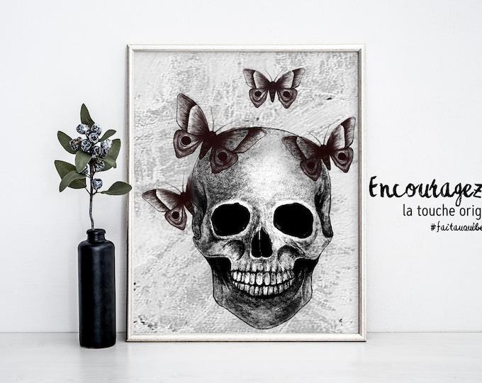 Moth and Skull illustration