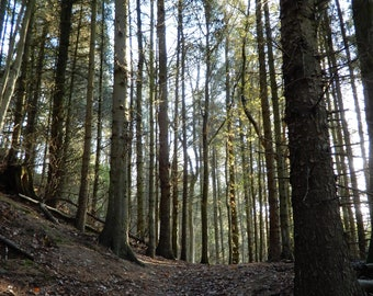 Photography Print Forest