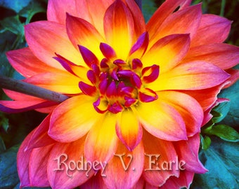 Pink, Yellow, and Orange Flower Instant Digital Photo Download