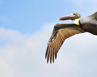 Pelican, Bird, Brown Pelican, Florida Birds, Wildlife Photography, Nature Photography, Flying Bird, Closeup, Pelican Photography