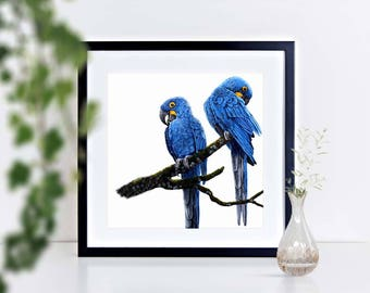 Hyacinth Macaws - limited edition signed print, framed or mounted