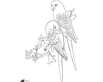 Coloring page. Spix Macaws