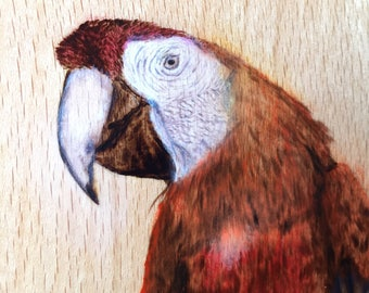 Pyrography Watercolor Mackaw Wood Art Wall Hanging
