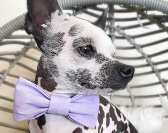 Light Purple Dog Bow Tie