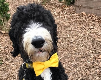 Yellow bow tie for dogs