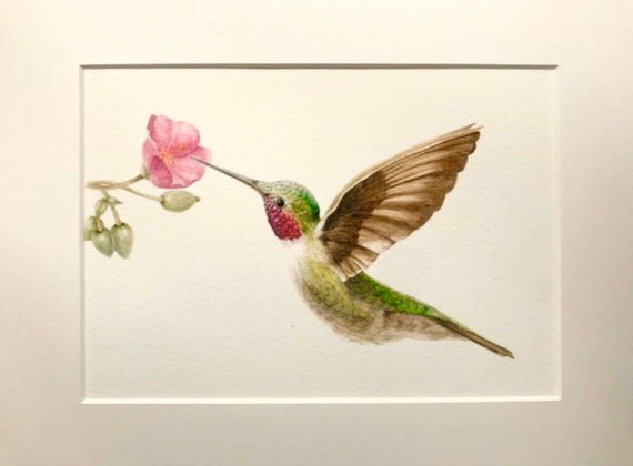 Hummingbird signed print by zeppelinmoon