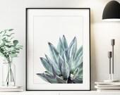 Succulent Print, Cactus Print, Aloe Vera Print, Agave Print, Bedroom Decor, Digital Download Prints, Agave Art, Plant Prints, 263