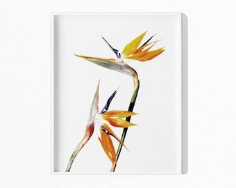 Bird Of Paradise Flower Print, Minimalist Flower Print, Printable Art, Flower Print, Instant Download, Botanical Art, Flower Art,  #554