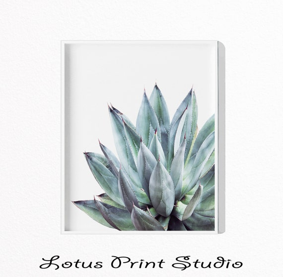 Cactus Print Aloe Vera Plant Prints Bear Leaf