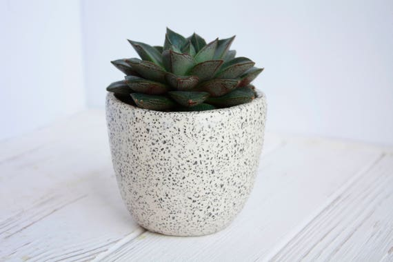 White Ceramic Planter With Black Dots Succulent Planter Etsy