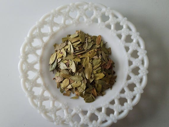 Bearberry Leaves/ Uva Ursi Dried Leaves/Loose Herb/Natural Curio/Loose  Herb/Protection