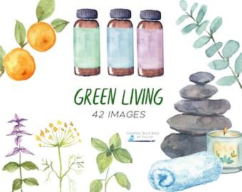 Essential Oils & Aromatherapy Illustrations, Patchouli, Clary Sage, Bergamot, Sandalwood, Balsam, Chamomile, Vetiver, Frankincense, Bottles