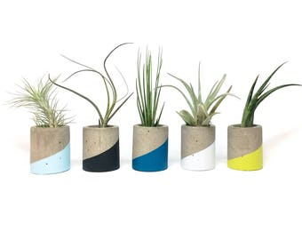 TINY concrete planter or air plant holder