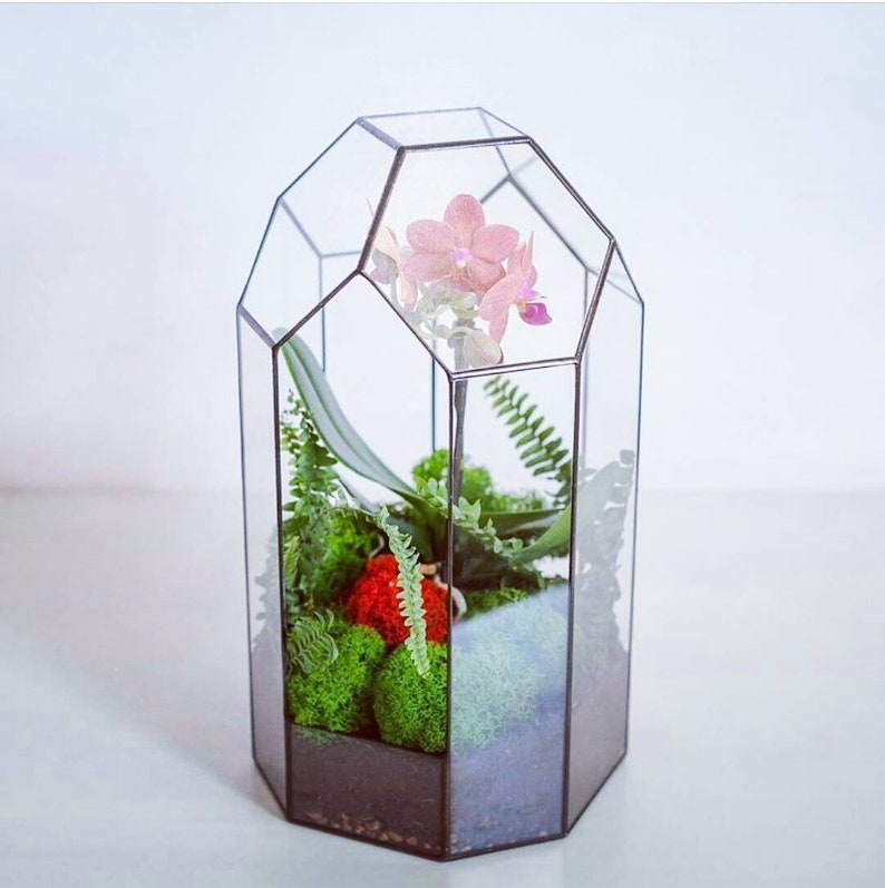 Orchid Terrarium Stained Glass Terrarium Container Polygon Etsy