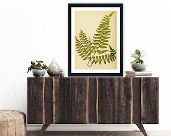 antique botanical print vintage botanical print, fern print, Victorian print, victorian etching, vintage wall art, vintage art