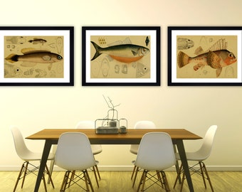 Vintage fish print fish wall art vintage print victorian wall art watercolour print fishes wall set antique fish print