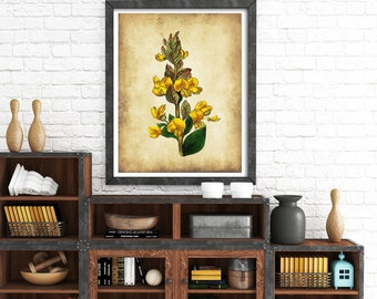 Vintage flower print, Botanical print, Victorian flower print, victorian etching, antique botanical, vintage wall art, vintage flower art