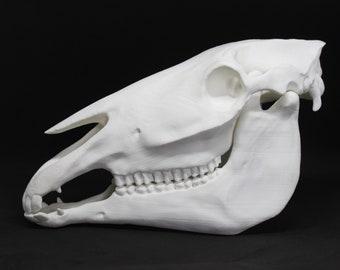 Horse Skull Etsy