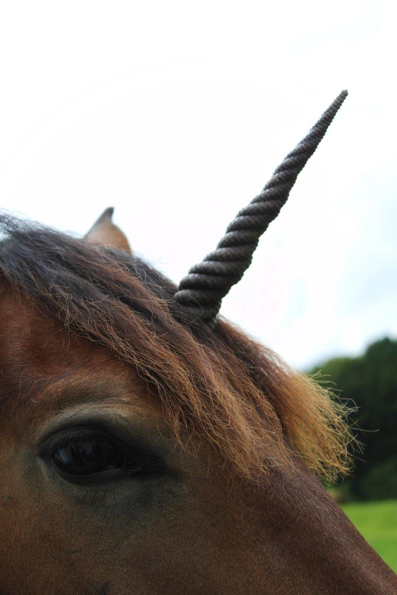 Dark brown Unicorn horn With detachable base