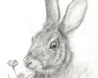rabbit drawing etsy