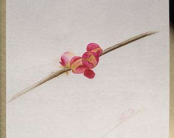 Blossom Knospe