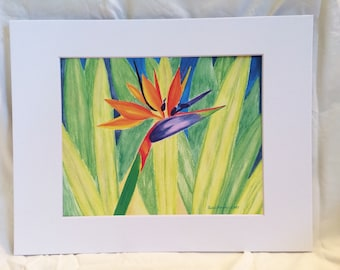 Bird of Paradise Tropical Flower and Leaves Watercolor Art Print, Great for Gallery Wall, Housewarming, Home Decor