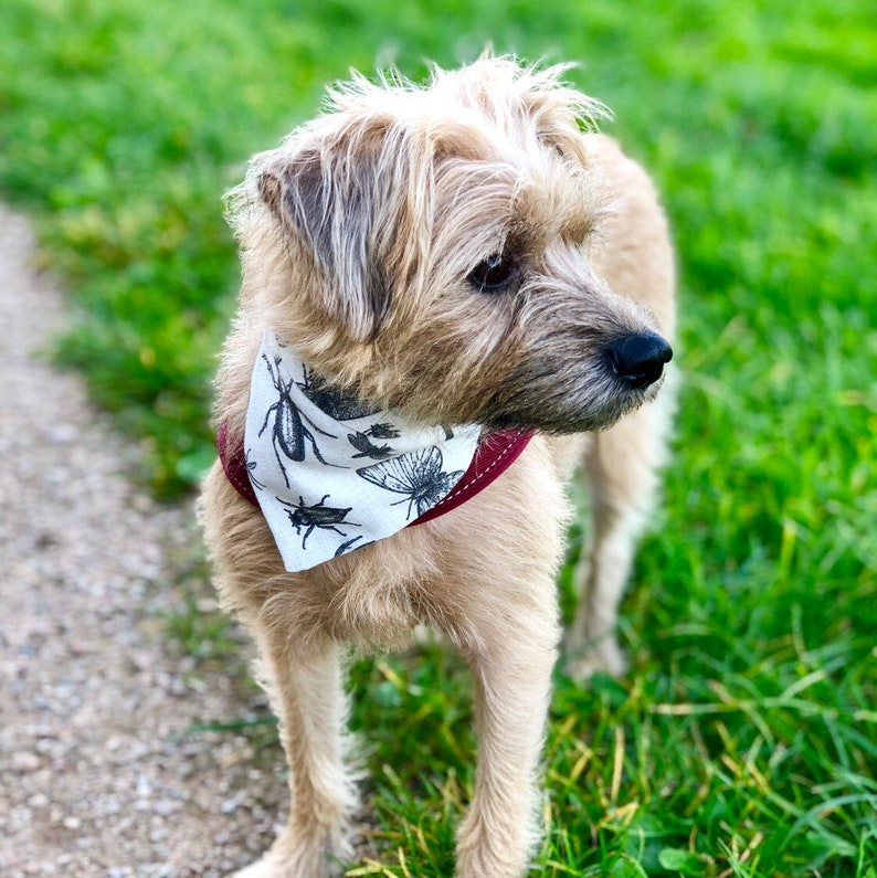 Come fly with me Insect bandana for dogs by Upperdogs.