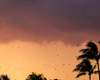 Sunsets and Palm Trees - Hawaii - Sunset - Ocean - Beaches - Prints - Photography - Hawaiian Sunsets - Photos - Prints - Long Exposure-