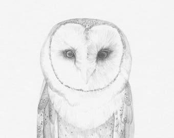 Owl_One- Original Pencil Drawing, wildlife art