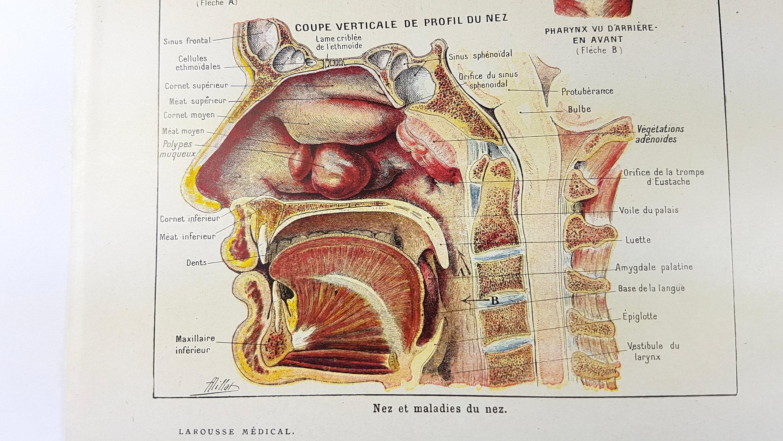 Gesicht der Nase atmen Organe Magen Anatomie Wörterbuch Druck | Etsy