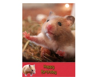 Personalised Hamster Birthday Greeting Card 8x55 Buy 3 Get 15 Off