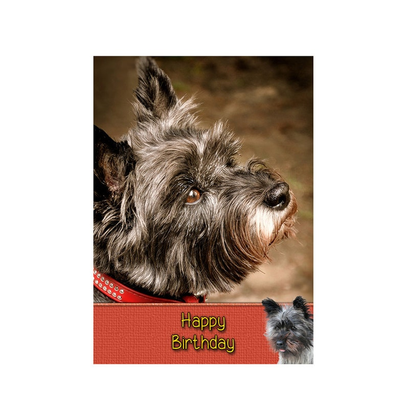 Personalised Cairn Terrier Dog Birthday Greeting Card