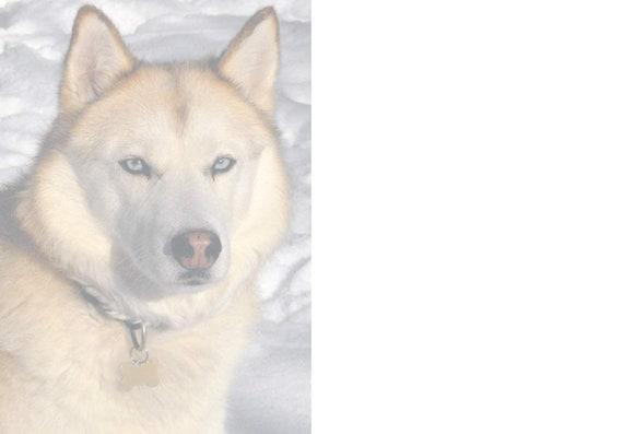Porte RACE DE CHIEN SIGNE autocollant Attention Labrador peut vous lécher à mort Home Fenêtre