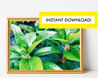 Green Leaf Photography PRINTABLE, Plant Photography Print, Plant Wall Art, Nature Photo, Digital Download, Photography Digital Download