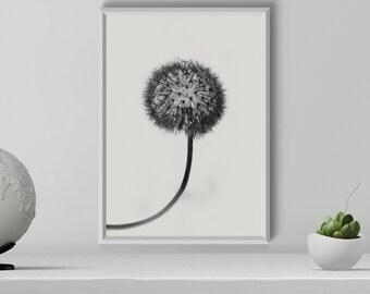 Black and White Dandelion Print, Dandelion Wall Art, Dandelion Photography, Botanical Print, dandelion decor, Wall Decor, Digital Download