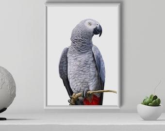 African Gray Parrot Print, Bird Art Print, Parrot Illustration, Handdrawn African Parrot, Tropical Decor, Digital Download, Exotic Bird