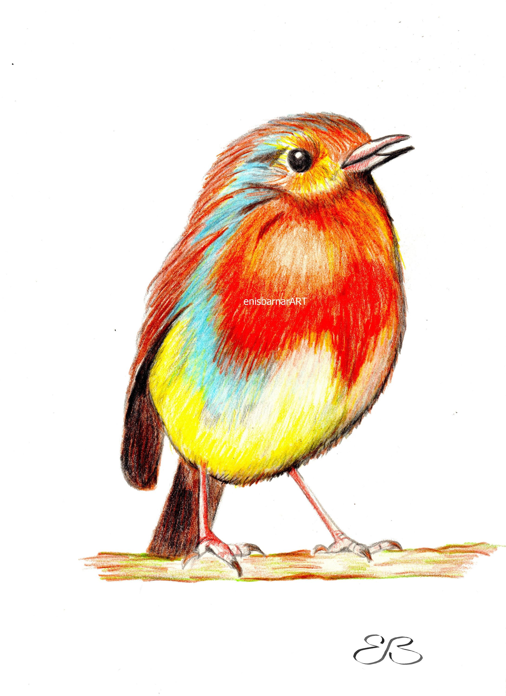 Bird small bird fat cute bird color pencil drawing paintingwall hanging cute birdie