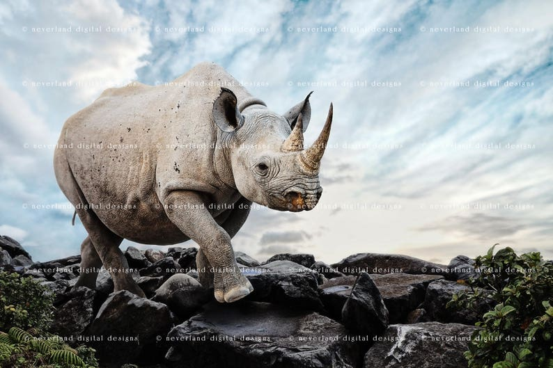 Rhinoceros Backdrop Background / 3-pack / Digital Background / Fantasy  Backdrop / Magical Download / Instant Download for Photographers