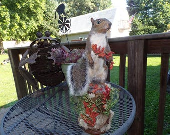 Taxidermy Beautiful new mount grey squirrel....great tail...on birch stump....colorful seed pods